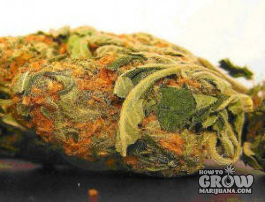 Chronic Seeds