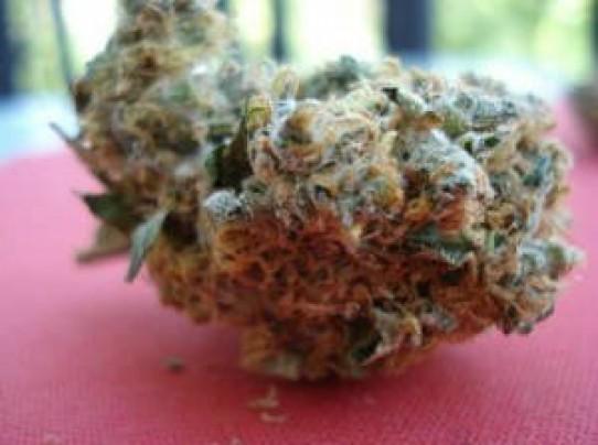 Orange Bud Weed Seeds